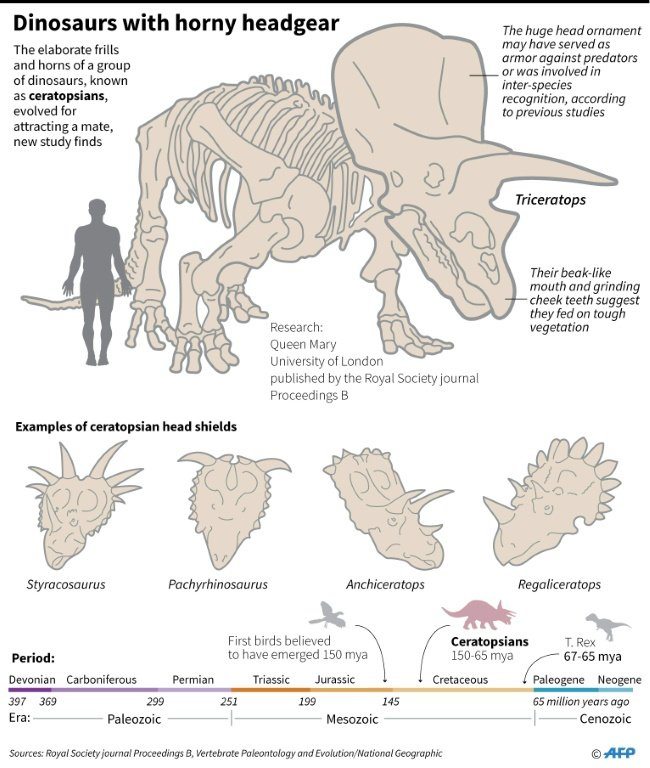 Graphic on dinosaurs with horns on their heads.