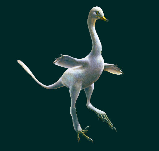 Halszkaraptor, a new and strange raptor dinosaur from Mongolia.