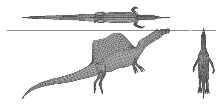 Henderson's models showed that Spinosaurus could float with its head above water. However, models of other dinosaurs demonstrated similar results. COURTESY ROYAL TYRRELL MUSEUM