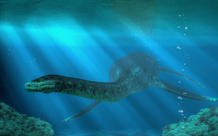Huge reptiles called plesiosaurs once swam in the ocean. Shutterstock