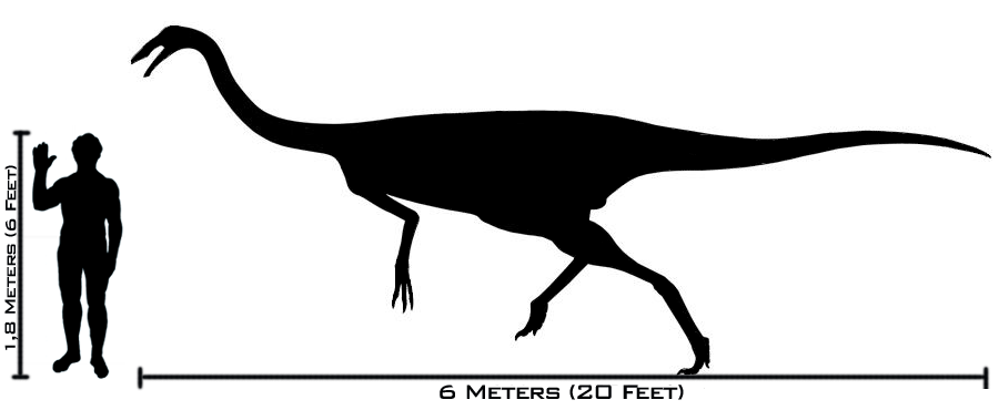 Human-gallimimus size comparison