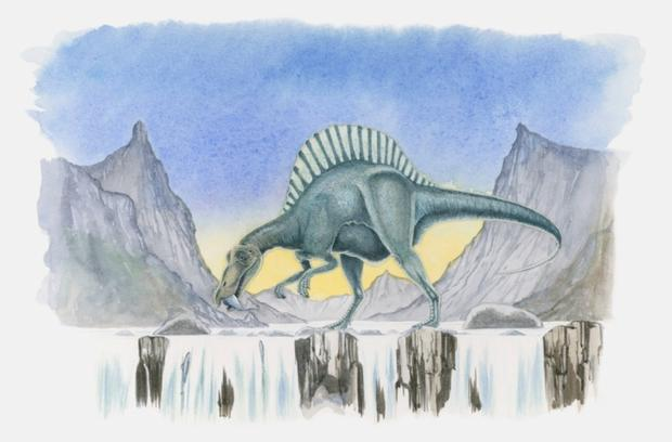 Illustration of a Spinosaurus catching fish in a river. Thinkstock