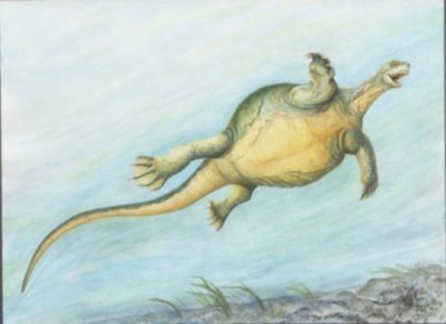 Illustration showing what Eorhynchochelys would have looked like in life. Credit: Adrienne Stroup, Field Museum