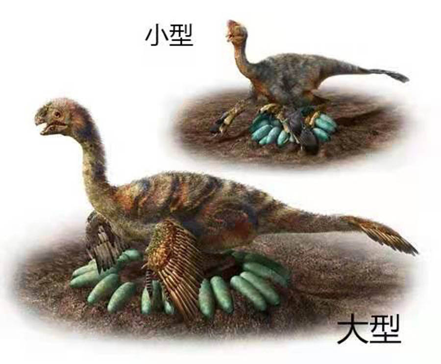 Image shows the brooding behavior of adult oviraptorids. Photo: Courtesy for Bi Shundong