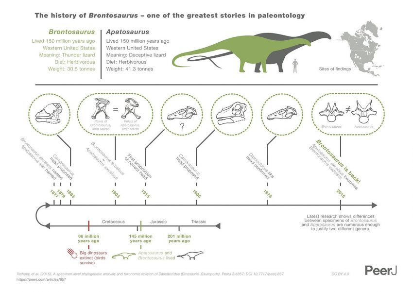 Infographic explaining the history of Brontosaurus and Apatosaurus according to Tschopp et al. 2015