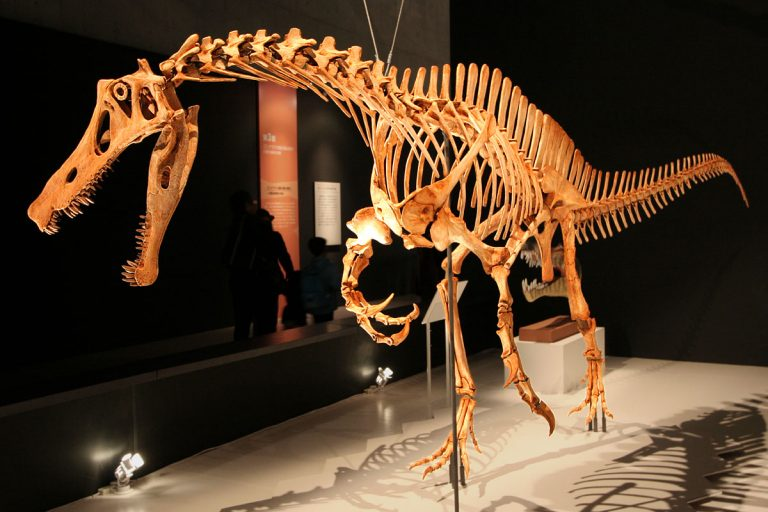Irritator skeleton