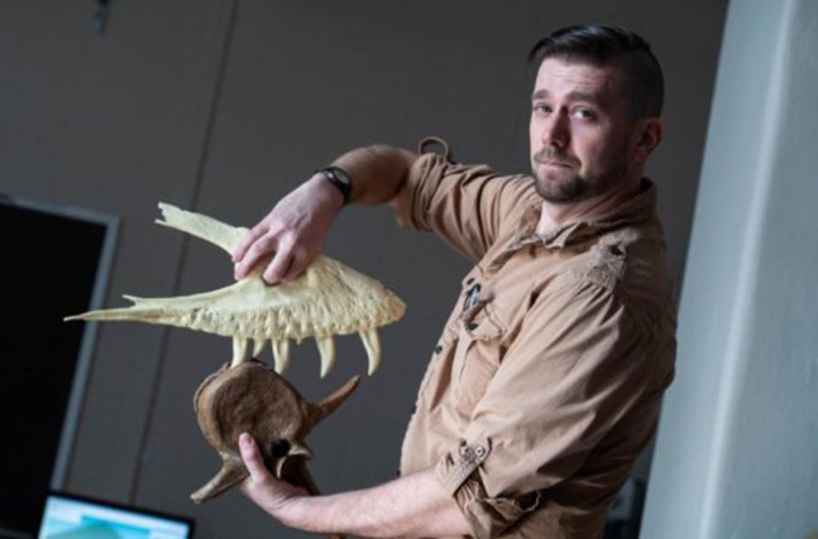 Joseph Peterson, a vertebrate paleontologist at the University of Wisconsin Oshkosh, demonstrates how a T. rex takes a bite. Credit: Patrick Flood, UW Oshkosh