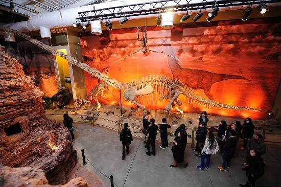 Jurassic Land: The detailed story of the dinosaur age is told with examples.