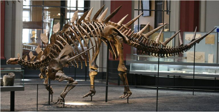 Kentrosaurus skeleton by nikkitikokathi @Flickr