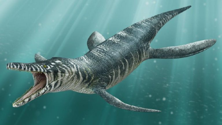 Kronosaurus: The Sea Giant of Australia
