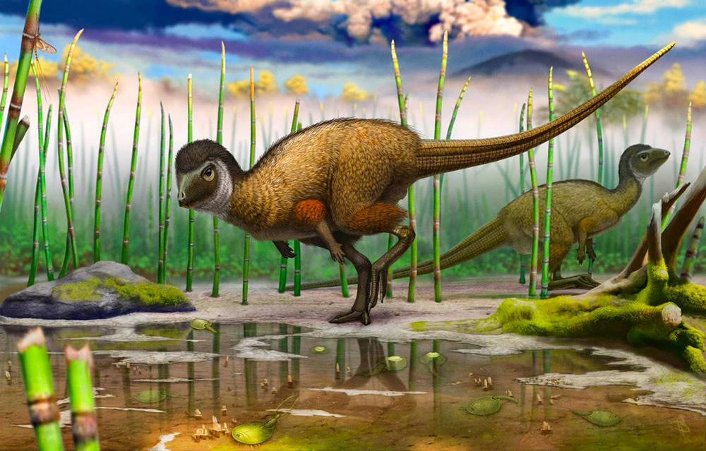 Kulindadromeus: An example of a plant-eating dinosaur with feathers and scales