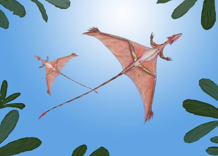 Life reconstruction of Sharovipteryx mirabilis by Dmitry Bogdanov