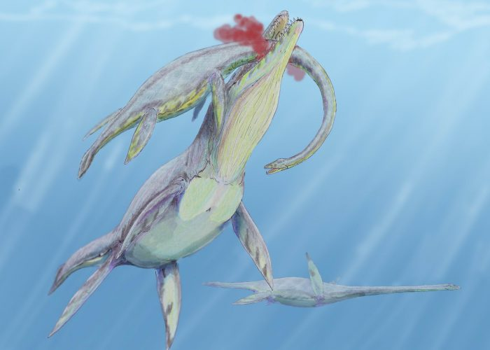 Life restoration of K. queenslandicus preying on Woolungasaurus by Dmitry Bogdanov, 2008.