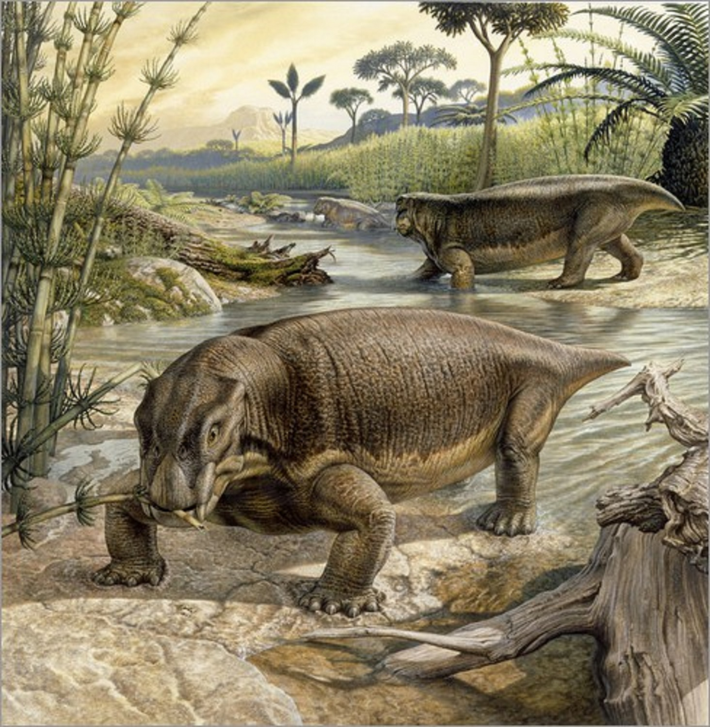 Lystrosaurus: is an extinct genus of dicinodontos therapsid Triassic period