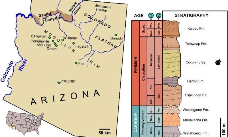 Map of Arizona (southwestern USA), indicating the main localities mentioned in the text. The Grand Canyon National Park area is shaded dark brown (left). Stratigraphic section of the Pennsylvanian and Permian rocks exposed in the Grand Canyon area (right). Credit: Modified from Blakey and Knepp 1989.