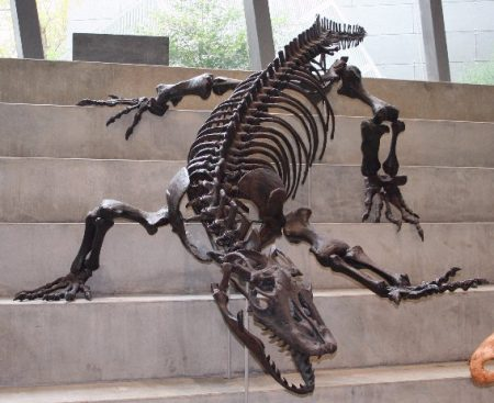 Megalania skeletal reconstruction on Melbourne Museum steps. Photo by Cas Liber