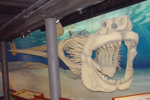A megalodon skeleton on display at the Calvert Marine Museum in Solomons, Maryland. (Photo: Calvert Marine Museum/Wikimedia Commons)
