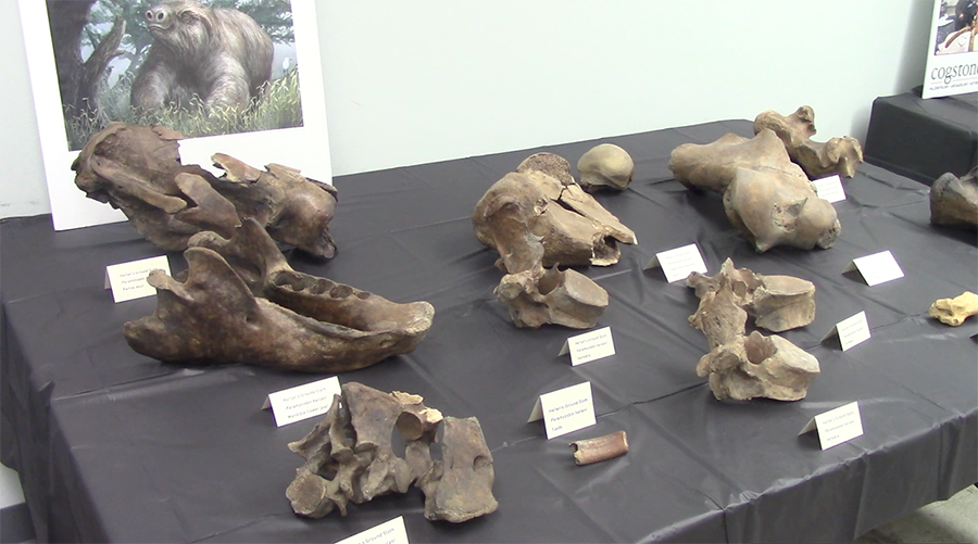 Metro officials and paleontologists presented their findings today at the La Brea Tarpits.