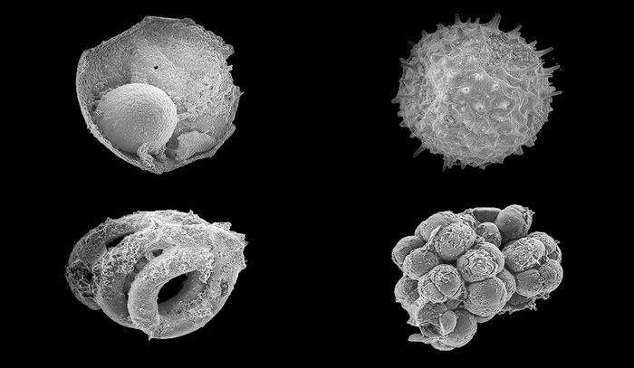 Mongolian Microfossils Point to the Rise of Animals on Earth