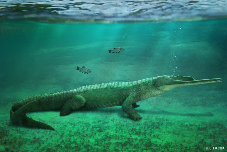 Mystriosuchus, a phytosaur specialised to an primarily aquatic lifestyle. By Julio Lacerda