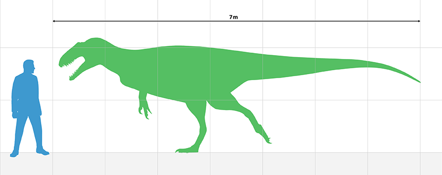 Estimated size based on the holotype.