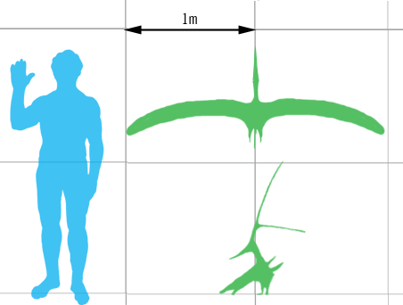 Size of a mature, crested specimen (green) compared with a human