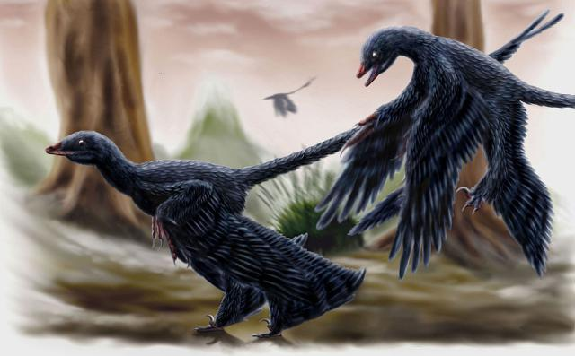 One Species of Microraptor Had Black Feathers