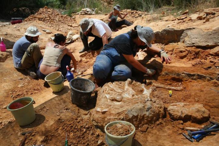Palaeontologists during excavation works on archaeological site at a river bed in Pikermi, Attica, Greece, June 4, 2018. EPA-EFE/ORESTIS PANAGIOTOU