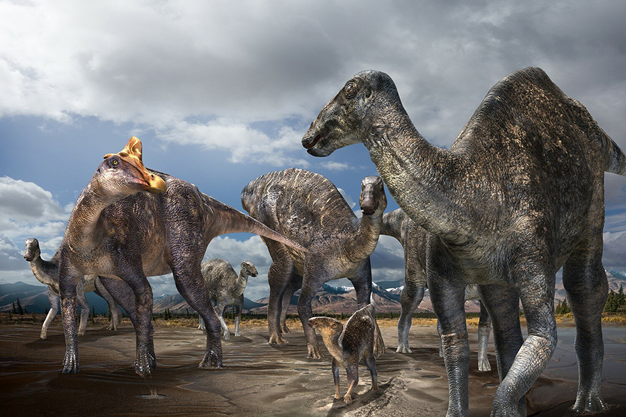 Paleontologists from Hokkaido University in Japan, in cooperation with paleontologists from the Perot Museum of Nature and Science in Dallas, Texas, have discovered the first-confirmed occurrence of a lambeosaurine (crested 'duck-billed' dinosaur) from the Arctic - part of the skull of a lambeosaurine dinosaur from the Liscomb Bonebed (71-68 Ma) found on Alaska's North Slope. The discovery proves for the first time that lambeosaurines inhabited the Arctic during the Late Cretaceous. See paper in Scientific Reports. Credit - Illustration by Masato Hattori. Credit: Masato Hattori