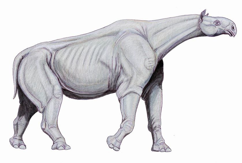 Paraceratherium, which stood 20 feet tall at the shoulder, lived around 25 million years ago in what is now Asia. (Photo: Dmitry Bogdanov/Wikimedia Commons)