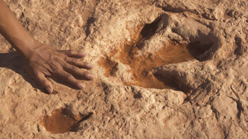 Places to See Real Dinosaur Tracks