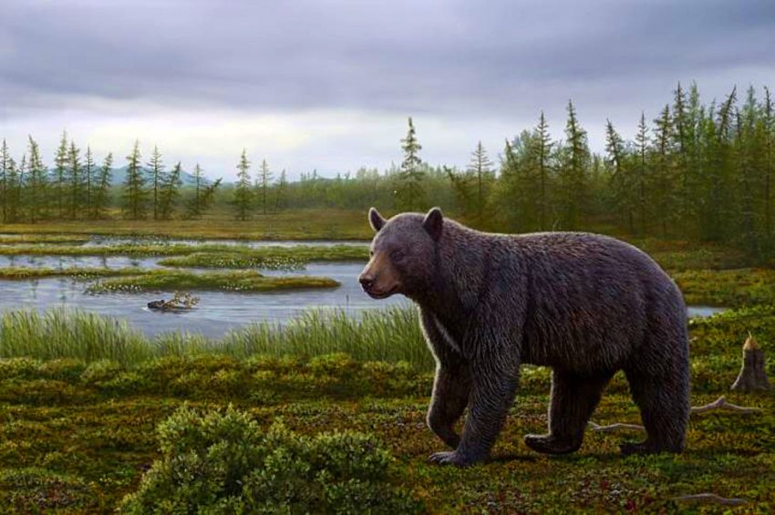 An artist's reconstruction shows Protarctos abstrusus in the Beaver Pond site area during the late summer. An extinct beaver, Dipoides, is shown carrying a tree branch in water. Plants include black crowberry with ripened berries, dwarf birch in foreground, sedges in water margins, and larch trees in background. (Mauricio Antón)