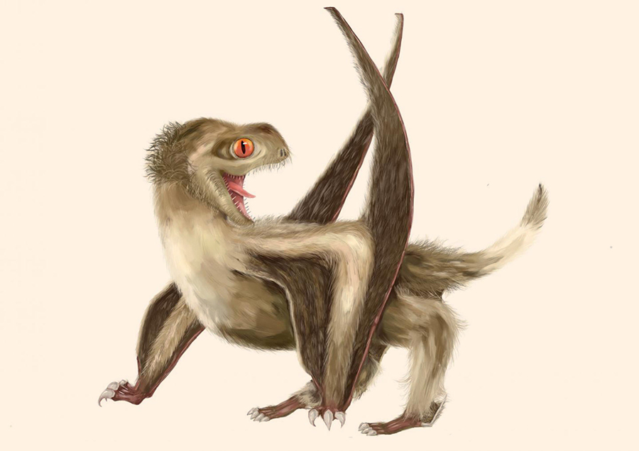Reconstruction of one of the studied Yanliao Biota pterosaurs, with four different feather types over its head, neck, body, and wings, and a generally ginger-brown color. Image credit: Yuan Zhang.