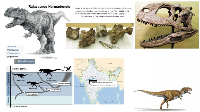 Rajasaurus miscellaneous