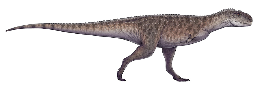 Restoration of Rajasaurus narmadensis based on GSI 21141/1–33.