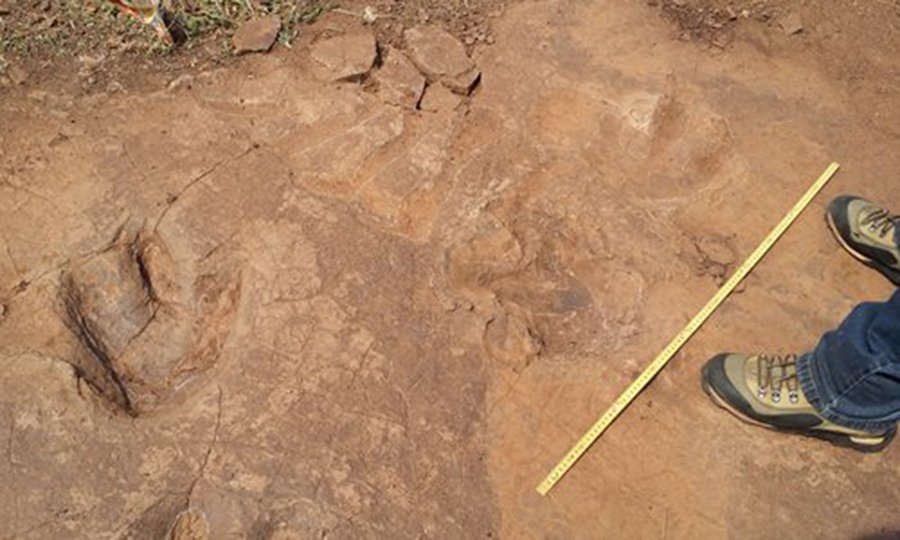 Rare footprints found in Chinese village reveal dinosaurs' 'social activities' - Global Times