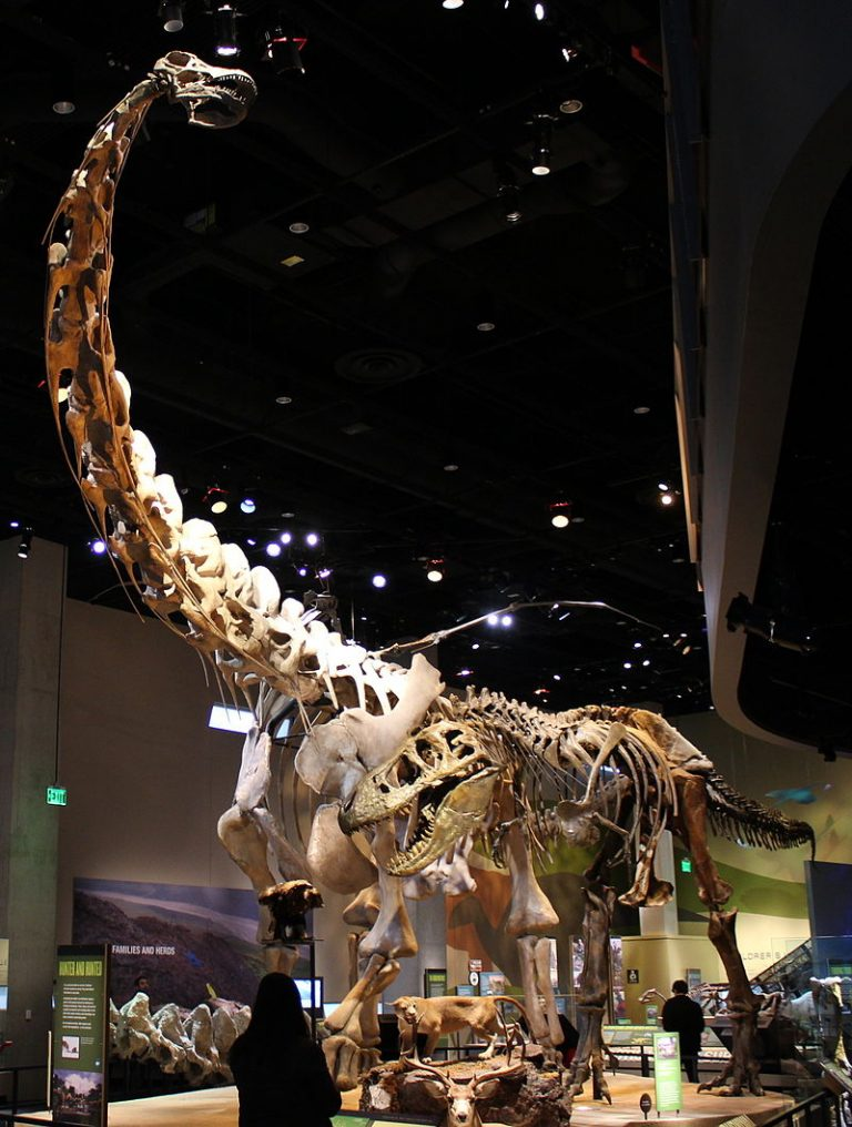 Reconstructed and restored skeletons of Tyrannosaurus rex harassing a Alamosaurus sanjuanensis by FunkMonk