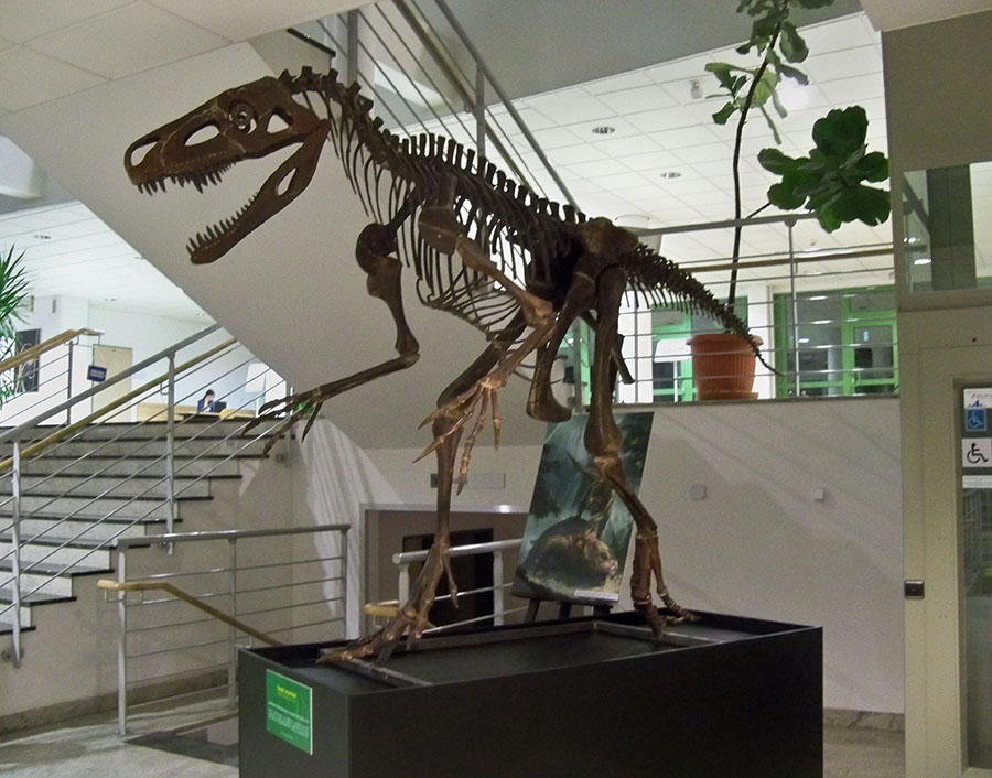 Reconstructed skeleton, University of Warsaw