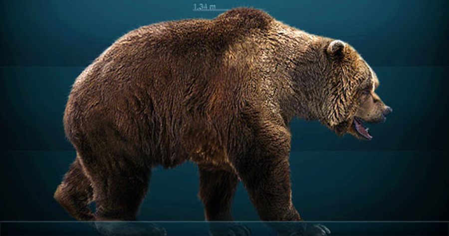 Reconstruction of the cave bear (Ursus spelaeus). Image credit: Sergio de la Larosa / CC BY-SA 3.0.