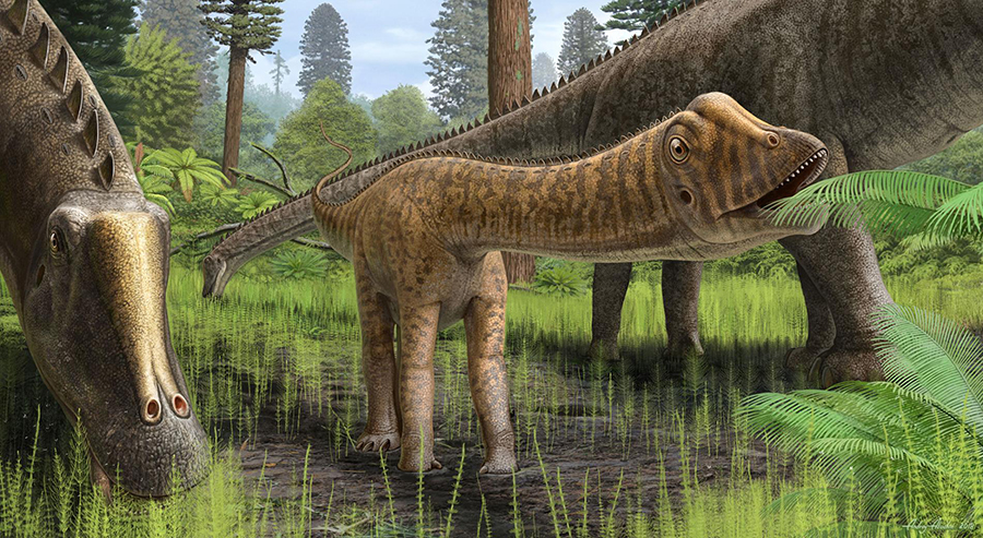 "Reconstruction of the dinosaur ""Andrew,"" thought to be a young Diplodocus, in its environment. Andrew's teeth were different from those of adult Diplodocus and suggest that it ate a wider variety of plant types. ILLUSTRATION BY ANDREY ATUCHIN"