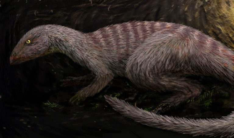 Restoration of an individual Oryctodromeus in its burrow FunkMonk (Michael B. H.)