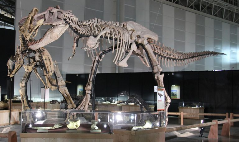 Restored skeletons of Zhuchengtyrannus and Shantungosaurus.