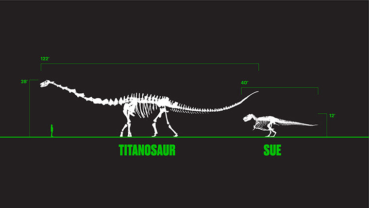 SUE to be Dethroned by 'Titan' of Evolution