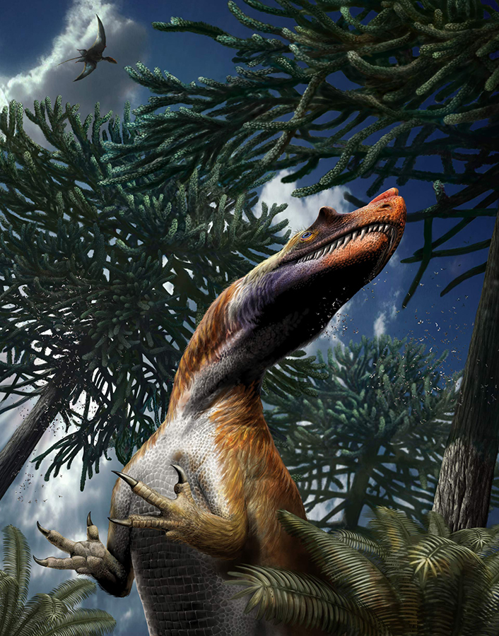 Life reconstruction of Saltriovenator zanellai. Image credit: Davide Bonadonna.