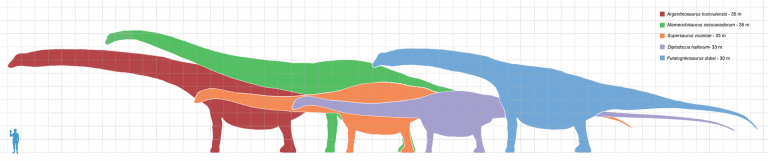 Scale chart comparing the sizes of several of the longest known dinosaurs. Author: Dinoguy2