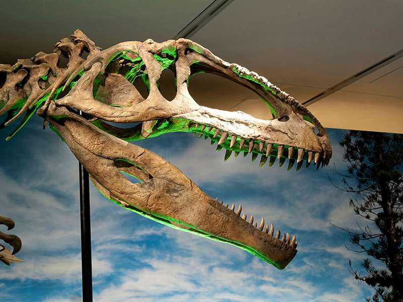 See how scientists prep this dino discovery for its big display. Photo courtesy of Perot Museum