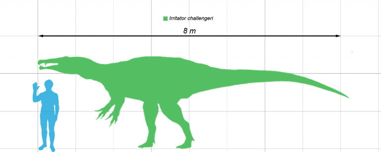 Size compared to a human by Matt Martyniuk (Dinoguy2)