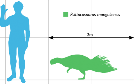 Size comparison of P. mongoliensis to a human. Each grid segment represents one square metre. Author: Dinoguy2