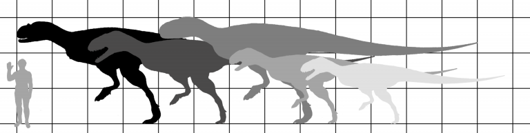 Size comparison of the Carnotaurus (left to right) Carnotaurus, Abelisaurus, Pycnonemosaurus, Aucasaurus and Quilmesaurus. Basis for all skeletons is Carnotaurus skeletal by Jaime Headden (on commons) with modified proportions and heads to fit other taxa. Author: IJReid