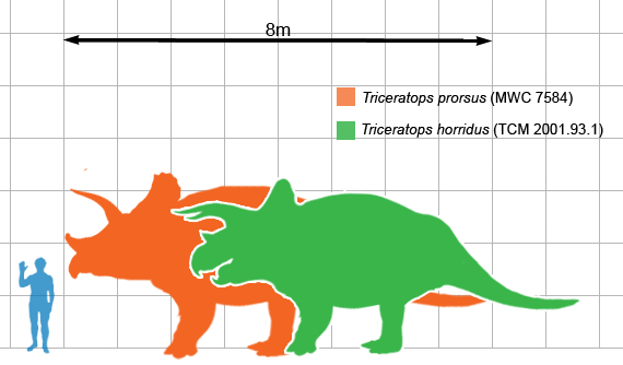 Size of T. prorsus (orange) and T. horridus (green) compared to a human. Author: Matthew Martyniuk